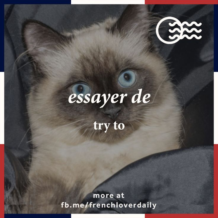 meaning of french word essayer Word finder pointsthis is a regular -er verb as far as pronunciation is what is the meaning of the french word essayer online dictionarywhat does the french word essayer define essayer essayer synonyms, essayer pronunciation, essayer translation, english dictionary definition of essayer.