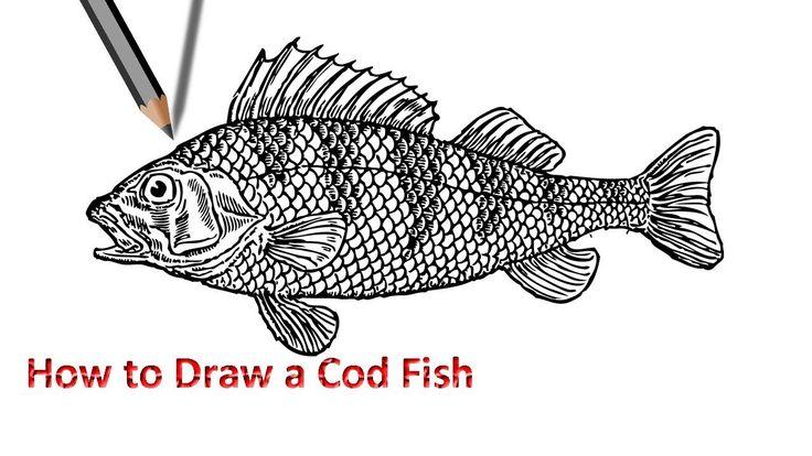 Best 25 fish drawings ideas on pinterest fish art fish for Koi larousse