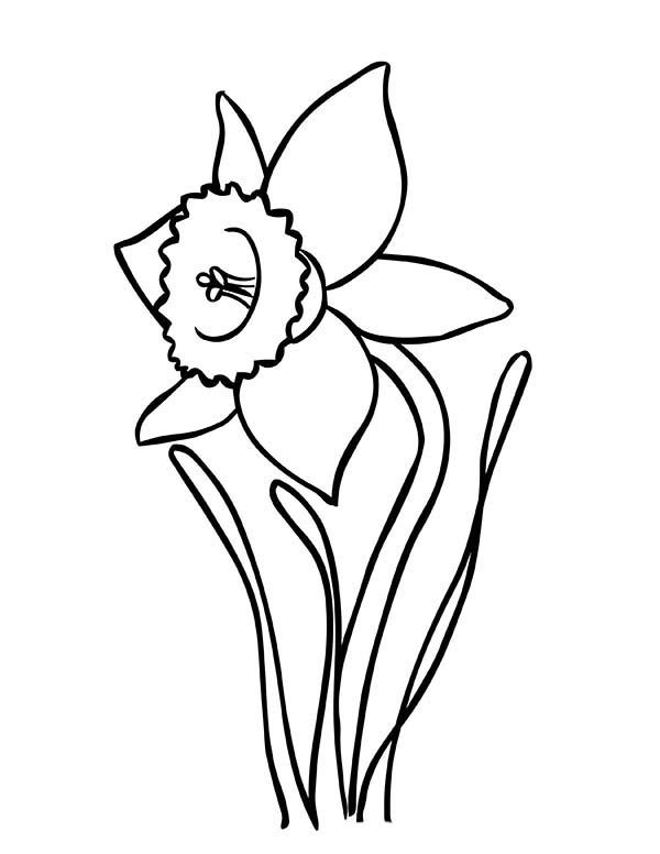 Daffodil Coloring Pages Best Coloring Pages For Kids Spring Coloring Pages Flower Coloring Pages Bunny Coloring Pages