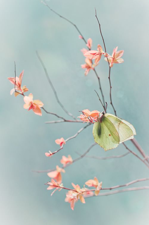 Dreamy And Surreal Nature Photography By Magdalena Wasiczek .