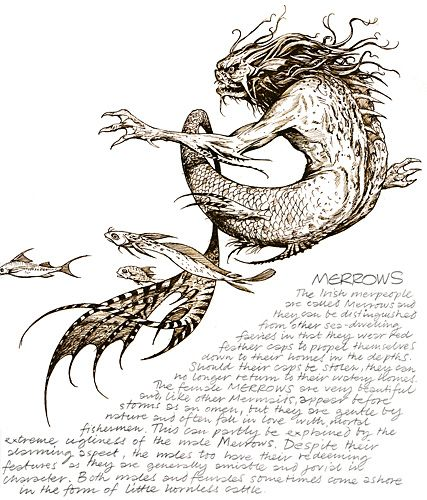 Brian Froud merrow Merrow (from Gaelic murúch) or Murrough (Galloway) is the Scottish and Irish Gaelic equivalent of the mermaid and mermen of other cultures.