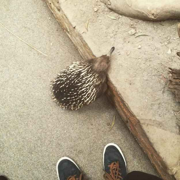 Spend the day with platypuses and echidnas.