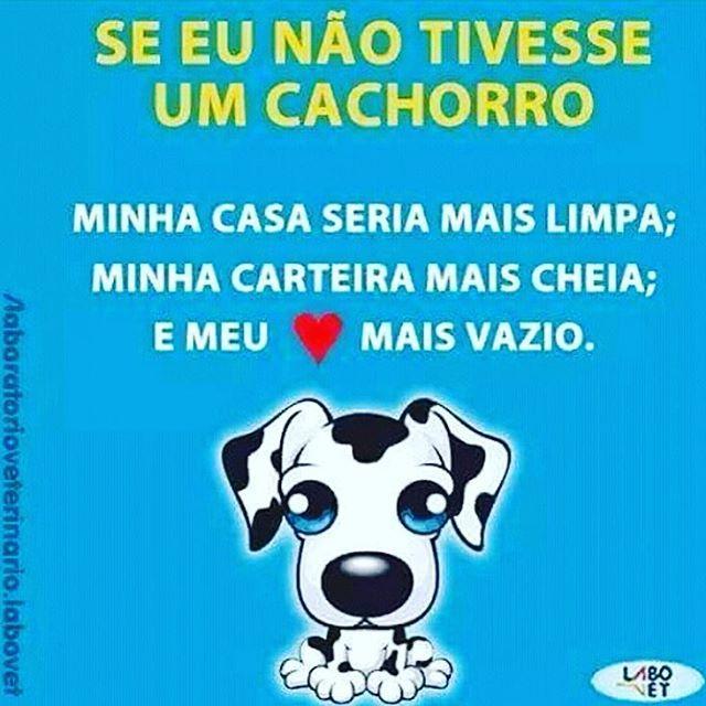 EXATAMENTE! ❤️❤️❤️ #petmeupet #cachorro #amocachorro #cachorroétudodebom #amorincondicional #amoanimais