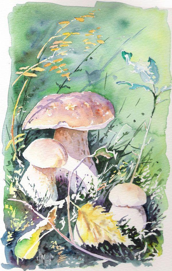 Champignon Joel Simon Watercolorarts Aquarelles En 2019