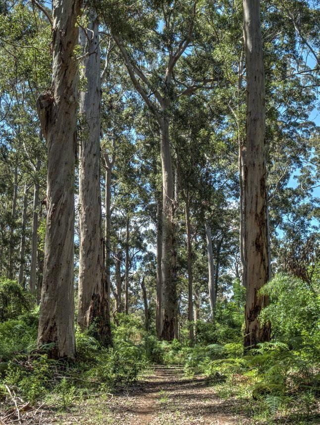 The world's 10 greatest walking trails - Bibbulman Track, Aus. (Outside of Perth)