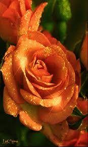 Resultado de imagen para rosas rojas hermosas gif