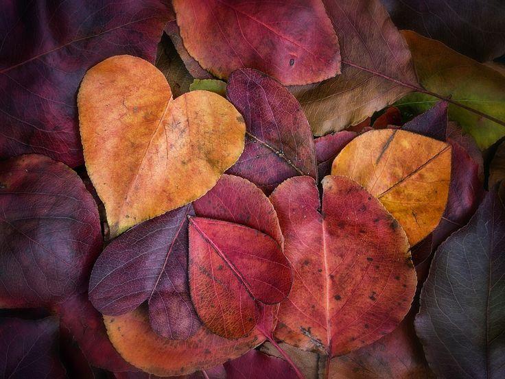 Am mostenit o mare comoara: iubirea din inima mea. https://plus.google.com/+NaturapentruSanatateGalati/posts/dyagjXuLZaK