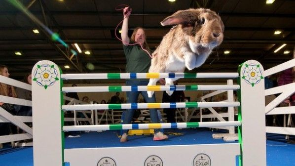 Grand National Rabbit Jumping Competition