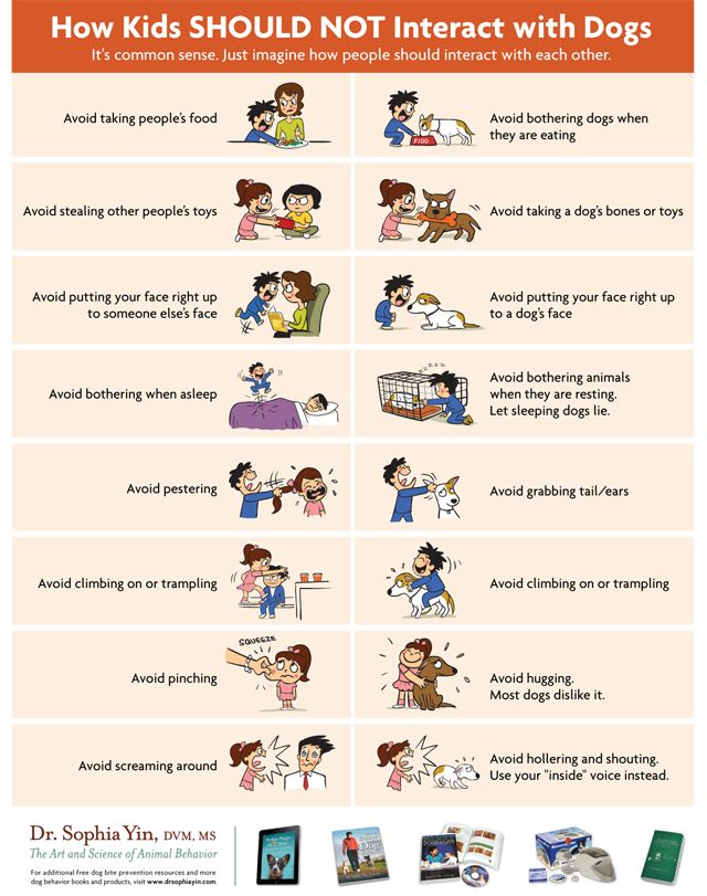 It's important to teach your kiddos how to interact with dogs. This handy infographic describes the dos and don't of pet interaction.