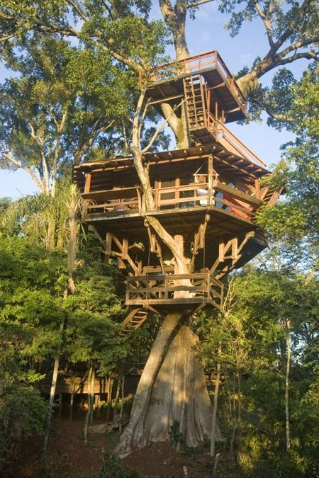 fig-tree house. Someday Jamie and I will build a treehouse for the future kids. These days kids spend way too much time inside and are losing their imagination and creativity.