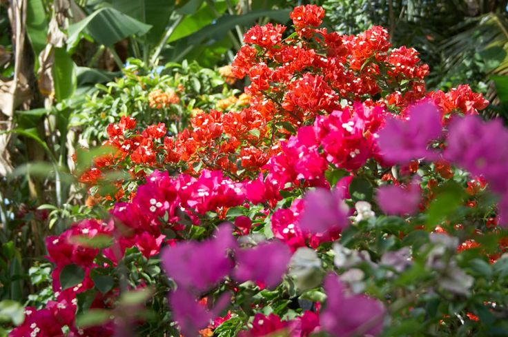 Astuces et bons plans : déco, bricolage, jardin, beauté...