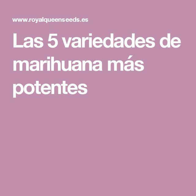 Las 5 variedades de marihuana más potentes