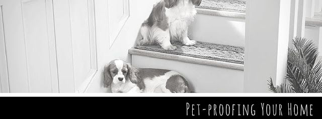 Although pets are loyal companions, many people are reluctant to own one for a fear of ruining their home and furniture. Read our blog for ways to pet proof your home without comprimising your desire to add a furry member to the family.