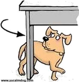Dog Separation Anxiety http://www.yucalmdog.com