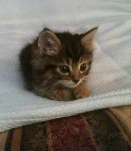 Söt liten kattunge.