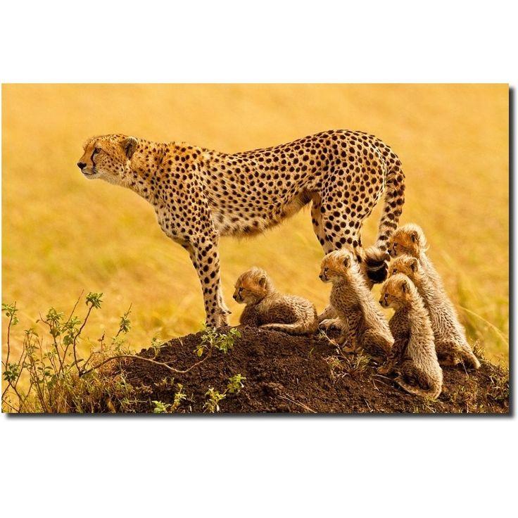 Cheetah Metal Print Wall Art | Stephen W Oachs | The Matriarch