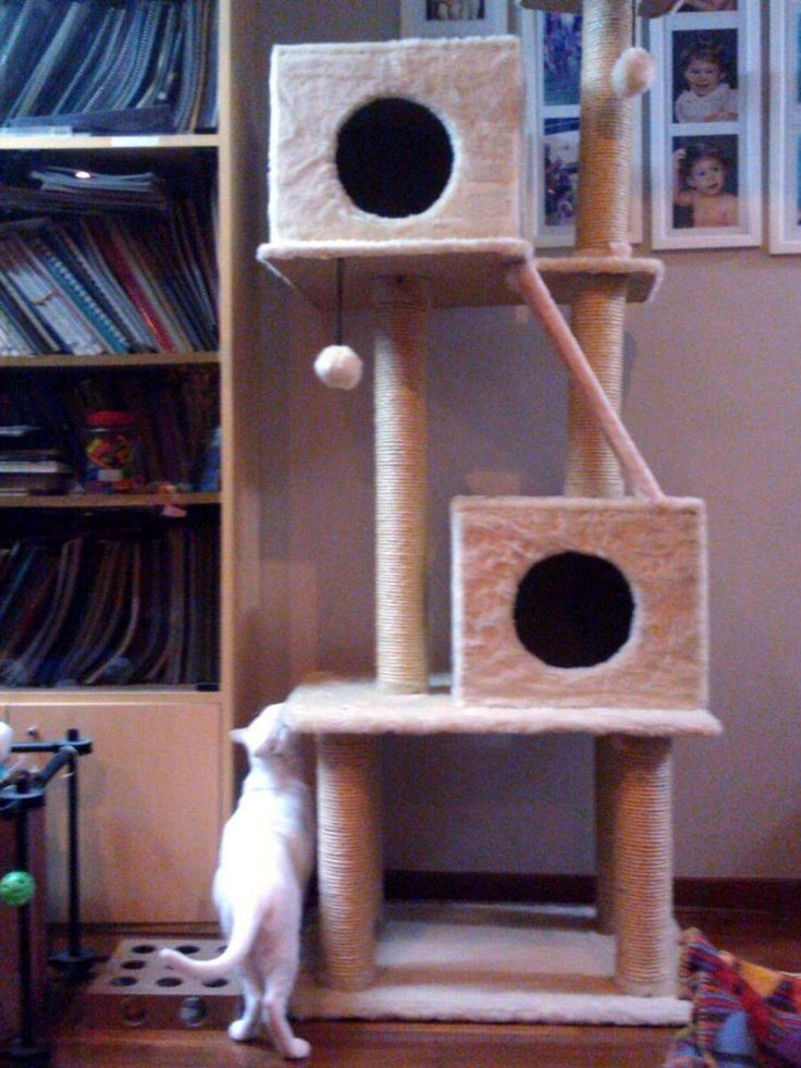 Casita para #Mascotas, #Rascador, Arañador Para Gatos Modelo Dany - Tenemos muchos accesorios para tu #gato, solicita nuestro catálogo dando click en la imagen. Lima / Perú