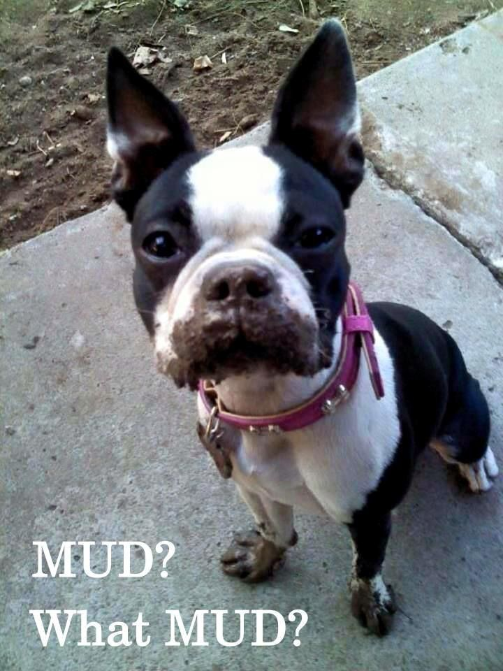 This is so Lucy!! She's always finding a mud puddle and sticking her face in it!