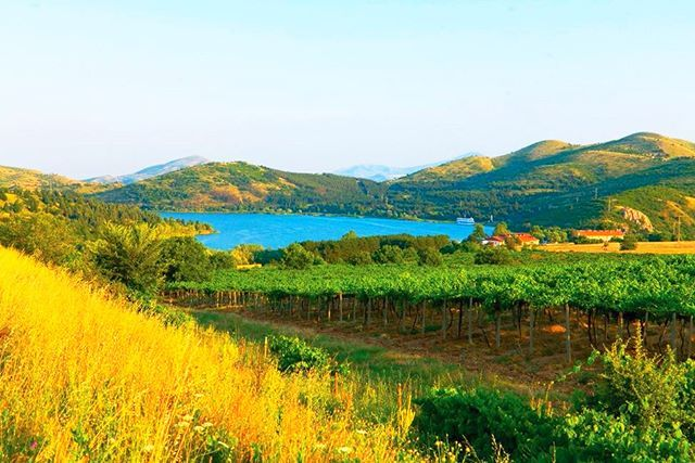 The #Lake Mladost is located at Otovica #River, left tributary of Vardar, eight kilometres north of #Veles. The construction of the accumulation was started in 1960, and finished in 1962. It covers 97 km' basin. The Lake is around 2 km long, 0.4 km wide and it covers an area of 0.84 km'. Thin ferroconcrete lacquered weir is established at the lake, having 35 meters height, and elevation of the crown 247 meters. The basic aim of the lake is irrigation of about 1350 ha arable area in the…