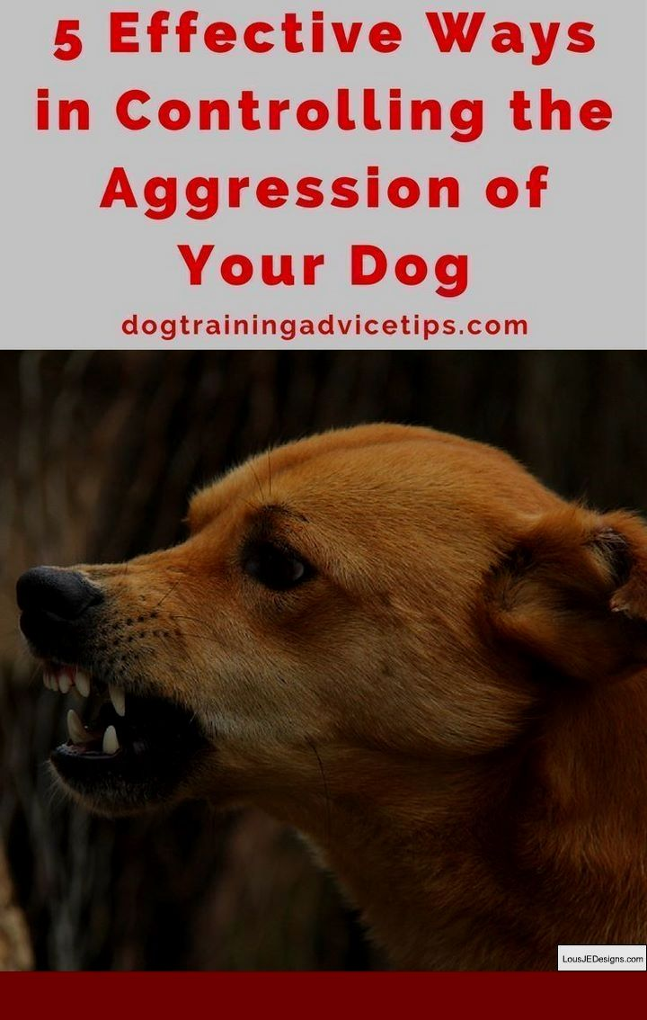 How To Train Dog Not To Bark For Food And Pics Of How To Train