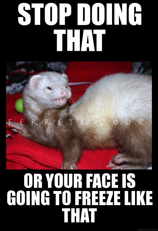 #ferrets #cute #animals #ferret #funny #for kids #forever #awesome #home #love  https://www.facebook.com/YourEverydayFerretFerretsDook