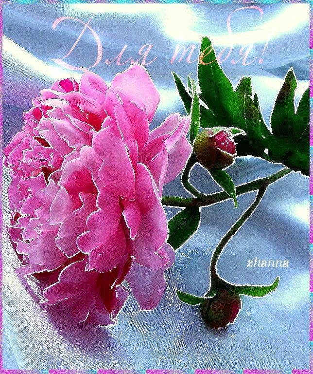 Траурная, открытка анимация цветы