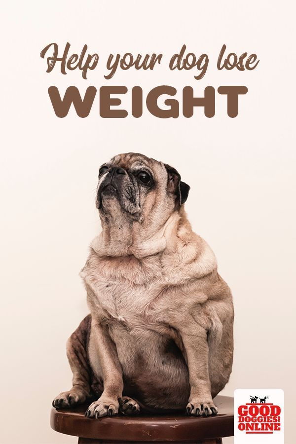 b1f9c09c04fe6ef4124e8a8bff8b0df2 - How To Get My Overweight Dog To Lose Weight