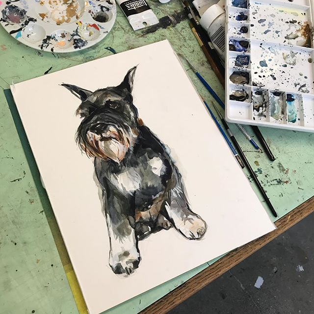 Need to update a painting at @littlearksf so working on a #schnauzer // also check out @fayesvideo cutest dog and cat contest. I'll be doing a #petportrait of the winners.  #dogs #dogsofinstagram #petart #watercolor  #Regram via @poopingrabbit