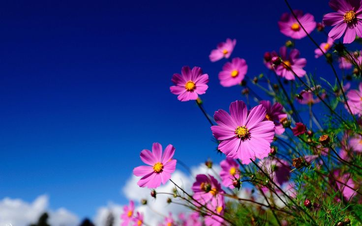 awesome pink flowers meadow wallpaper Check more at http://www.finewallpapers.eu/pin/19642/