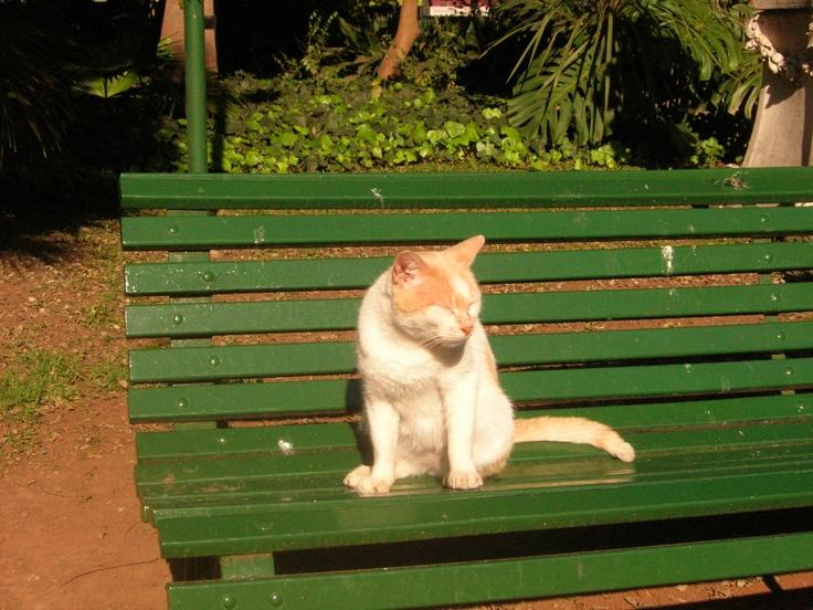 Gato al sol como los jubilados. Jardín Botánico de Buenos Aires, 2008.