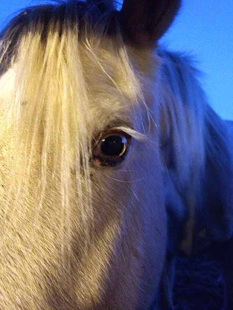 The horses of mental health therapy