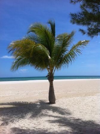 Passion Island, Cozumel Mexico~Where the Corona commercials are filmed.