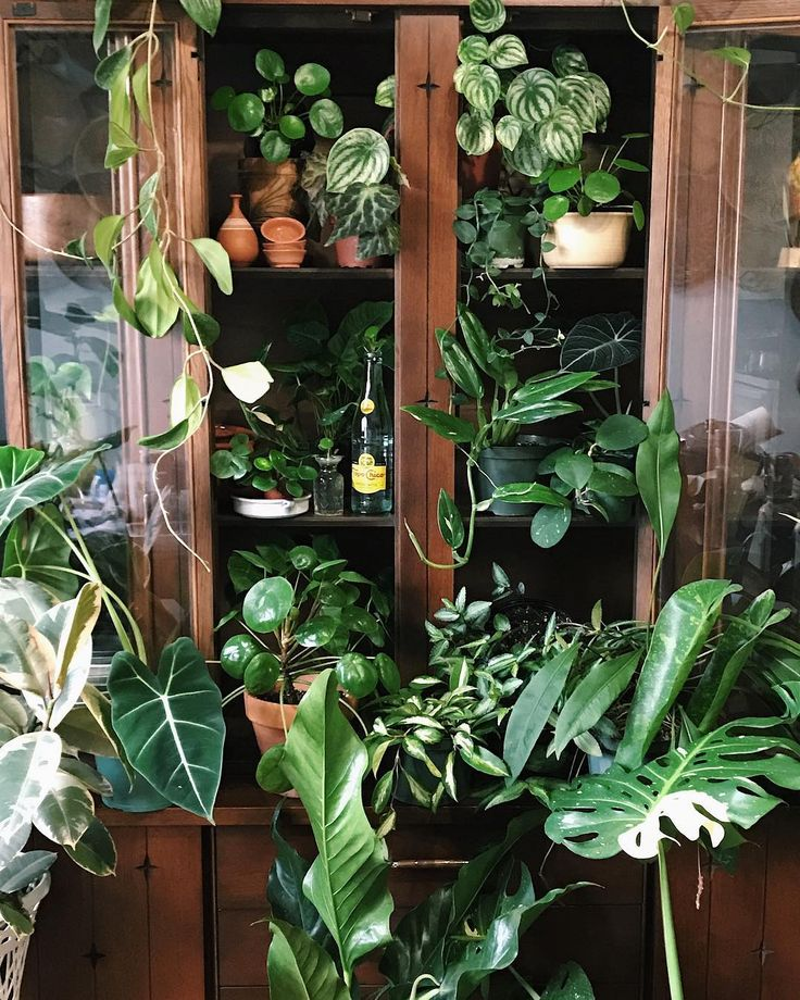 Indoor gardening will allow you to have