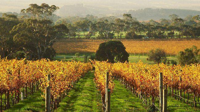 Penny Hill Vineyard, McLaren Vale, South Australia