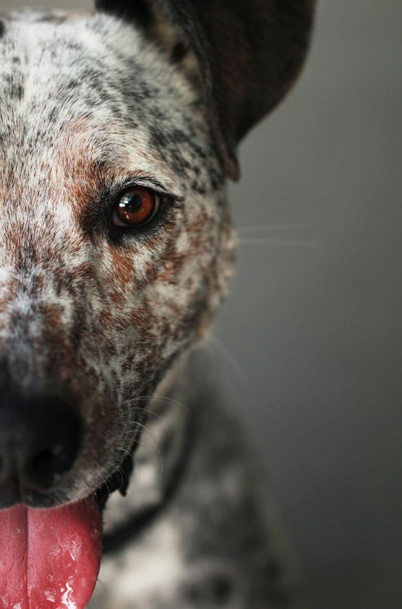 Interest Closeup cut off cropping pet photography | #Pet #Photography #Closeup #Dog #Puppy #Cropping #Crop #Half #Detail #Tongue #PetPhotography