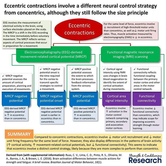 Eccentric training tends to cause eccentric-specific strength gains, which have historically been attributed to largely spinal mechanisms.  However, new research is showing that motor learning may contribute quite substantially. Although cortical activation is higher during eccentric contractions, functional connectivity between the primary motor cortex and other brain areas is lower. -------------------- #sandcresearch #strengthandconditioning #strengthtraining #strength #sportsscience…