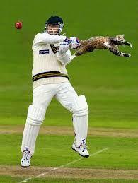 cricket est un sport populaire en angletere. cricket est similaire de baseball