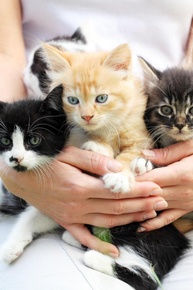 45 Cat Breeds With The Friendliest Personalities Cat Breeds Cat Noises Kittens Funny