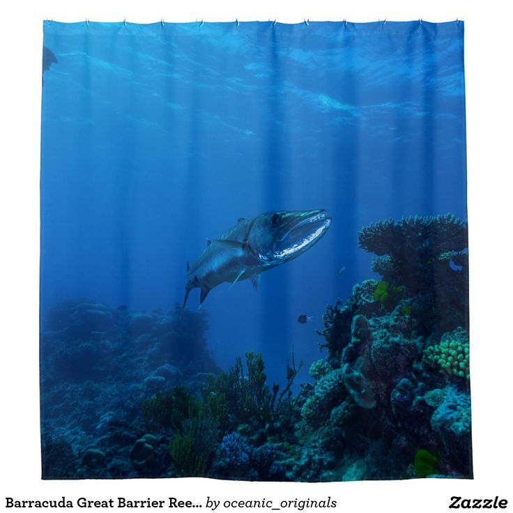 Cool shower curtain featuring an amazing shot of a barracuda hanging about in the clear blue waters surrounding Australia's Great Barrier Reef in the Coral Sea.