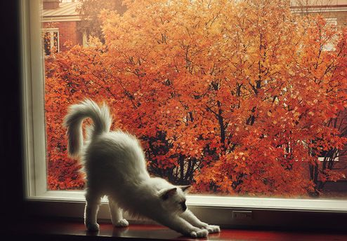 gif cat cute hipster indie Halloween cats Grunge kitten fall nature autumn cozy…