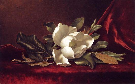 Обои Белый цветок магнолии, художник Мартин Джонсон Heade