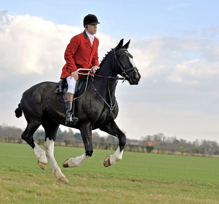 42 Best Images About Foxhunting And Sidesaddle On Pinterest