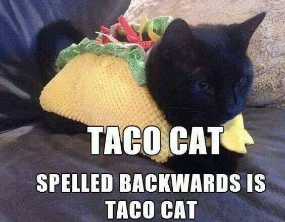 taco cat. IT'S TACO TUESDAY!