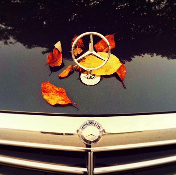 """The leaves are quickly changing color at Tafel Motors. Take a look at our inventory and """"fall"""" in love! #TafelMotors #Louisville #Kentucky #LouisvilleKY"""