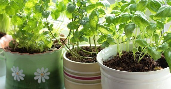 12 Easy Herbs To Grow On Your Windowsill Small Herb Garden On The