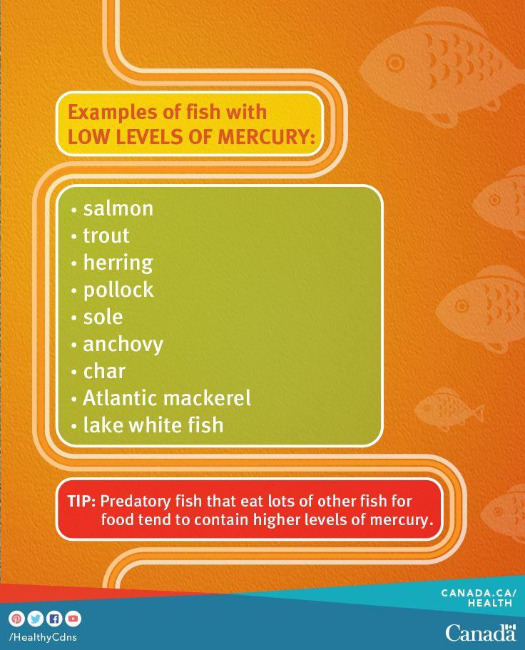 Learn all about mercury levels in fish:  http://www.hc-sc.gc.ca/fn-an/securit/chem-chim/environ/mercur/merc_fish_qa-poisson_qr-eng.php?utm_source=pinterest_hcdns&utm_medium=social_en&utm_content=jan17_omega&utm_campaign=social_media_14