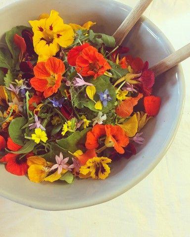 Doddington Place Gardens - » Green's of Devon – Edible Flowers - Faversham, Sittingbourne, Kent