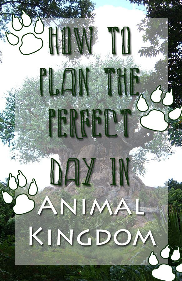 There is so much to do in Animal Kingdom and we have the resources to help you plan your perfect day at the park!