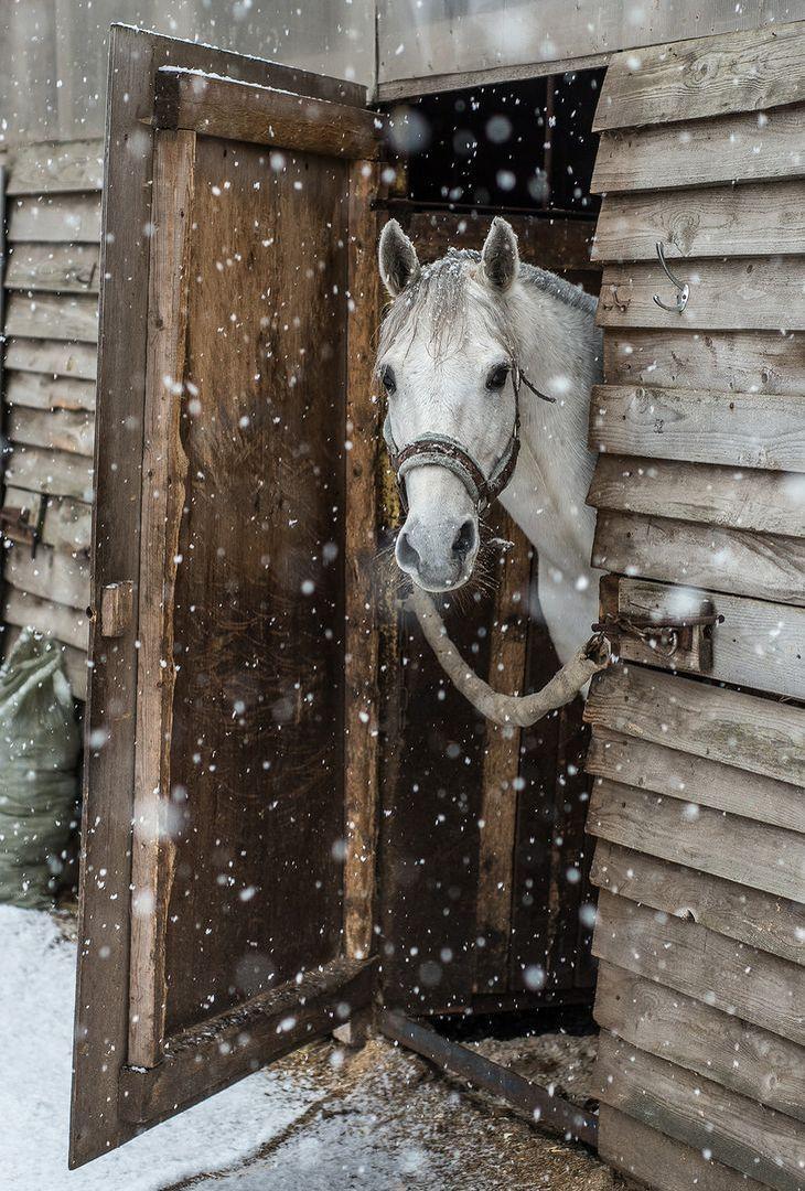 In The Barn Door