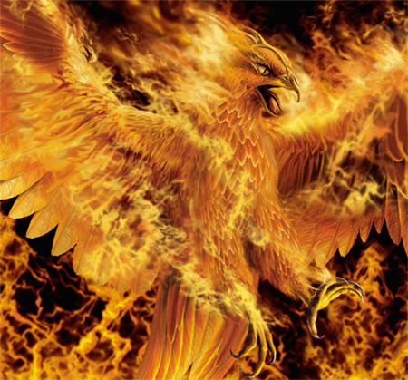 A phoenix is a mythical bird with a tail of beautiful gold and red plumage (or purple and blue, by some sources [1]). It has a 600-800 year life-cycle, and near the end the phoenix builds itself a nest of cinnamon twigs that it then ignites; both nest and bird burn fiercely and are reduced to ashes, from which a new, young phoenix or phoenix egg arises, reborn anew to live again. The new phoenix is destined to live as long as its old self.